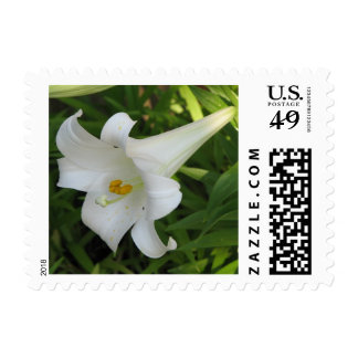 White Lily Postage Stamp