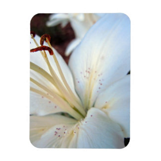 White Lily Pretty Rectangular Photo Magnet