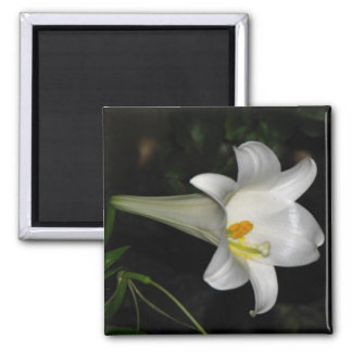 White Lily Square Magnet