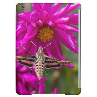 White-lined sphinx moth feeds on flower nectar 2