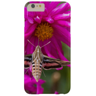 White-lined sphinx moth feeds on flower nectar 2 barely there iPhone 6 plus case