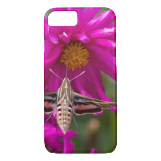 White-lined sphinx moth feeds on flower nectar 2 iPhone 8/7 case