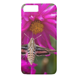 White-lined sphinx moth feeds on flower nectar 2 iPhone 8 plus/7 plus case