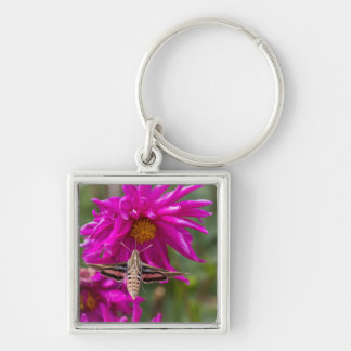 White-lined sphinx moth feeds on flower nectar 2 Silver-Colored square key ring