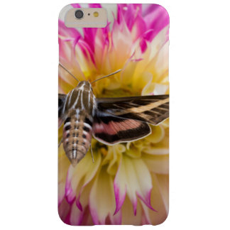 White-lined sphinx moth feeds on flower nectar barely there iPhone 6 plus case