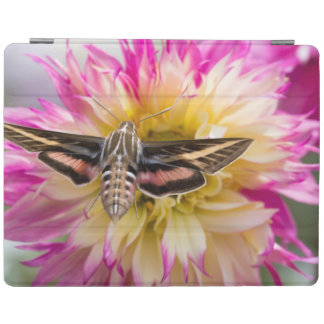 White-lined sphinx moth feeds on flower nectar iPad cover