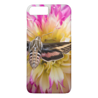 White-lined sphinx moth feeds on flower nectar iPhone 8 plus/7 plus case