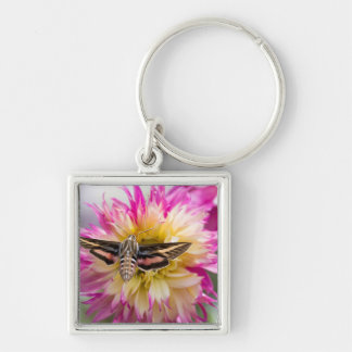 White-lined sphinx moth feeds on flower nectar Silver-Colored square key ring