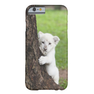 White lion cub hiding behind a tree. barely there iPhone 6 case