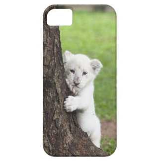 White lion cub hiding behind a tree. iPhone 5 case