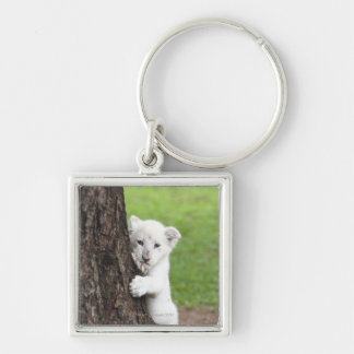 White lion cub hiding behind a tree. Silver-Colored square key ring