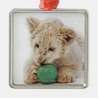White lion cub (Panthera leo krugeri) playing Christmas Ornament