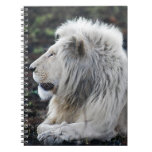 White lion in repose journal
