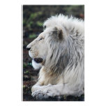 White lion in repose stationery design