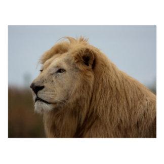 White Lion - Postcard
