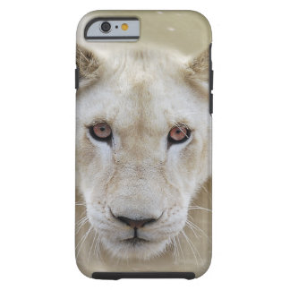 White Lion Spirit Warrior Africa Tough iPhone 6 Case