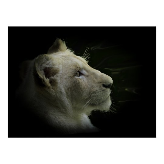 White Lion Wildlife Lion-Lover Poster