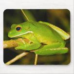 White Lipped Tree Frog Litoria Infrafrenata Mousepads
