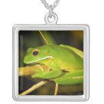 White Lipped Tree Frog Litoria Infrafrenata Pendant