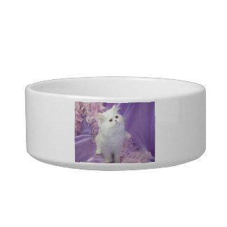White Long Haired Kitten Cat Pet Bowl