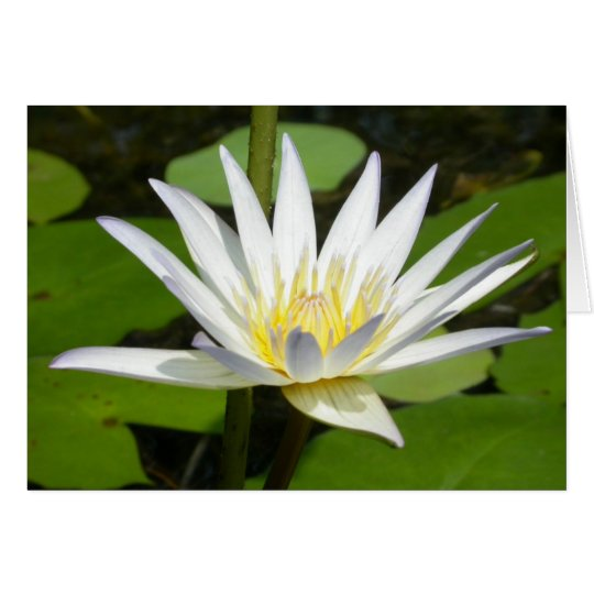 White Lotus Flower Card
