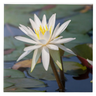 White lotus flower large square tile