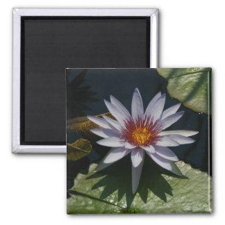 White Lotus Waterlily magnet