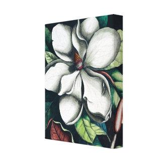 White magnolia botanical premium illustration canvas print