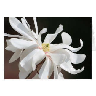 White magnolia card
