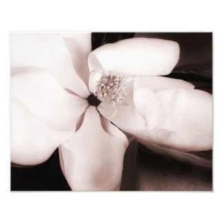 White Magnolia Flower Black Background Abstract Art Photo