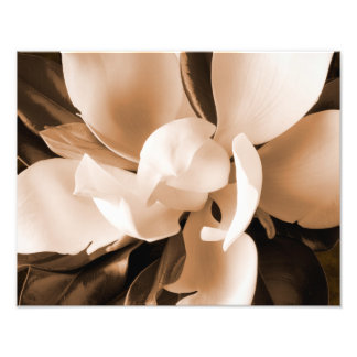 White Magnolia Flower Black Background Art Photo