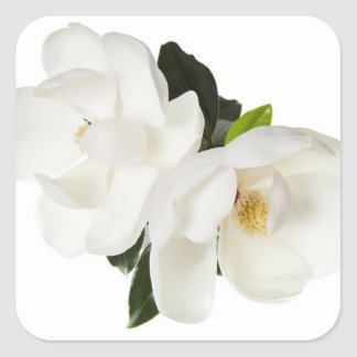 White Magnolia Flower Magnolias Floral Flowers Square Sticker