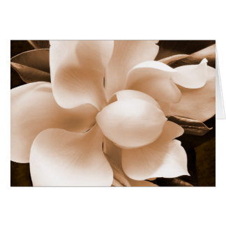 White Magnolia Flower Sepia Black Background Card