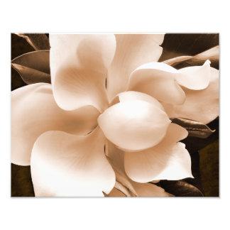 White Magnolia Flower Sepia Black Background Photo Print