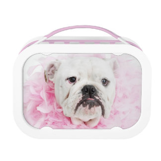 White male dog with pink boa lunch boxes