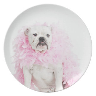 White male dog with pink boa plate