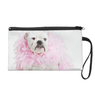 White male dog with pink boa wristlet