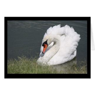 White Male Swan Card