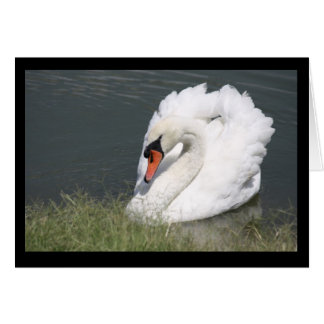 White Male Swan Note Card