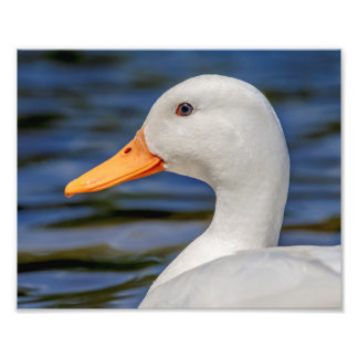 White Mallard Duck Photo Print