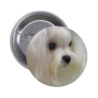 White Maltese 6 Cm Round Badge
