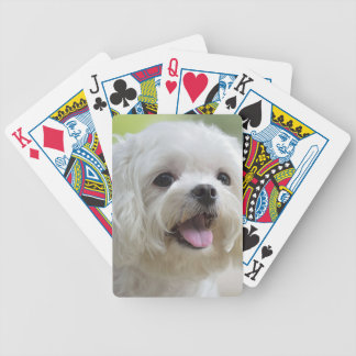 White maltese dog sticking out tongue bicycle playing cards