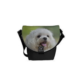 White maltese dog sticking out tongue commuter bags
