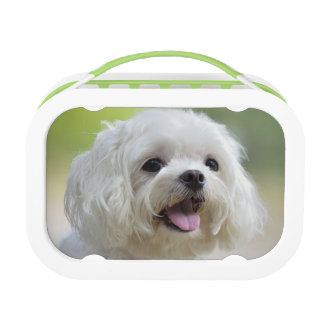 White maltese dog sticking out tongue lunch box