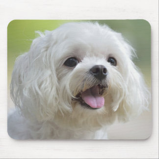 White maltese dog sticking out tongue mouse mat