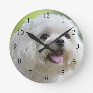White maltese dog sticking out tongue round clock