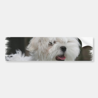 White Maltese Puppy Bumper Sticker