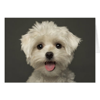 White Maltese Puppy Dog Blank Note Card
