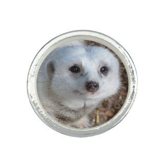 White Meerkat Closeup Ladies Silver Round Ring.