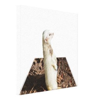 White Meerkat Dimensional Art, Canvas Print
